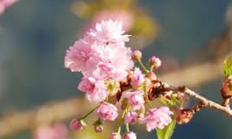 Fiera di Primavera